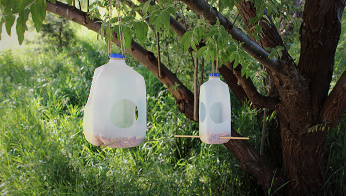BirdFeeders_blog