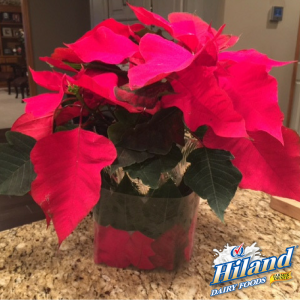diy-poinsettia-plant-holder