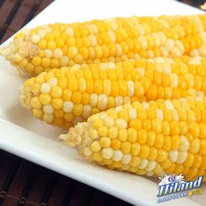 Milk Boiled Corn on the Cob Recipe