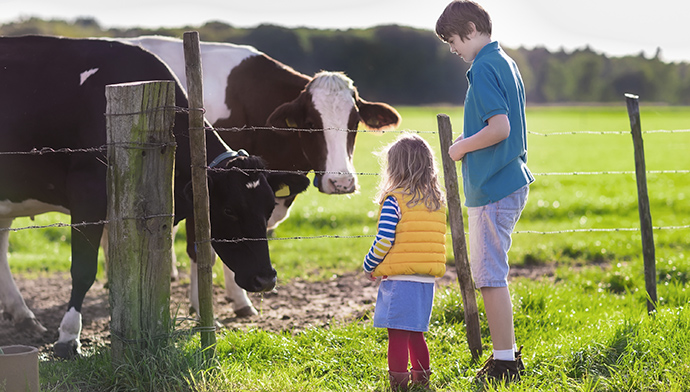 Milk's Journey From the Farm to Your Child's School